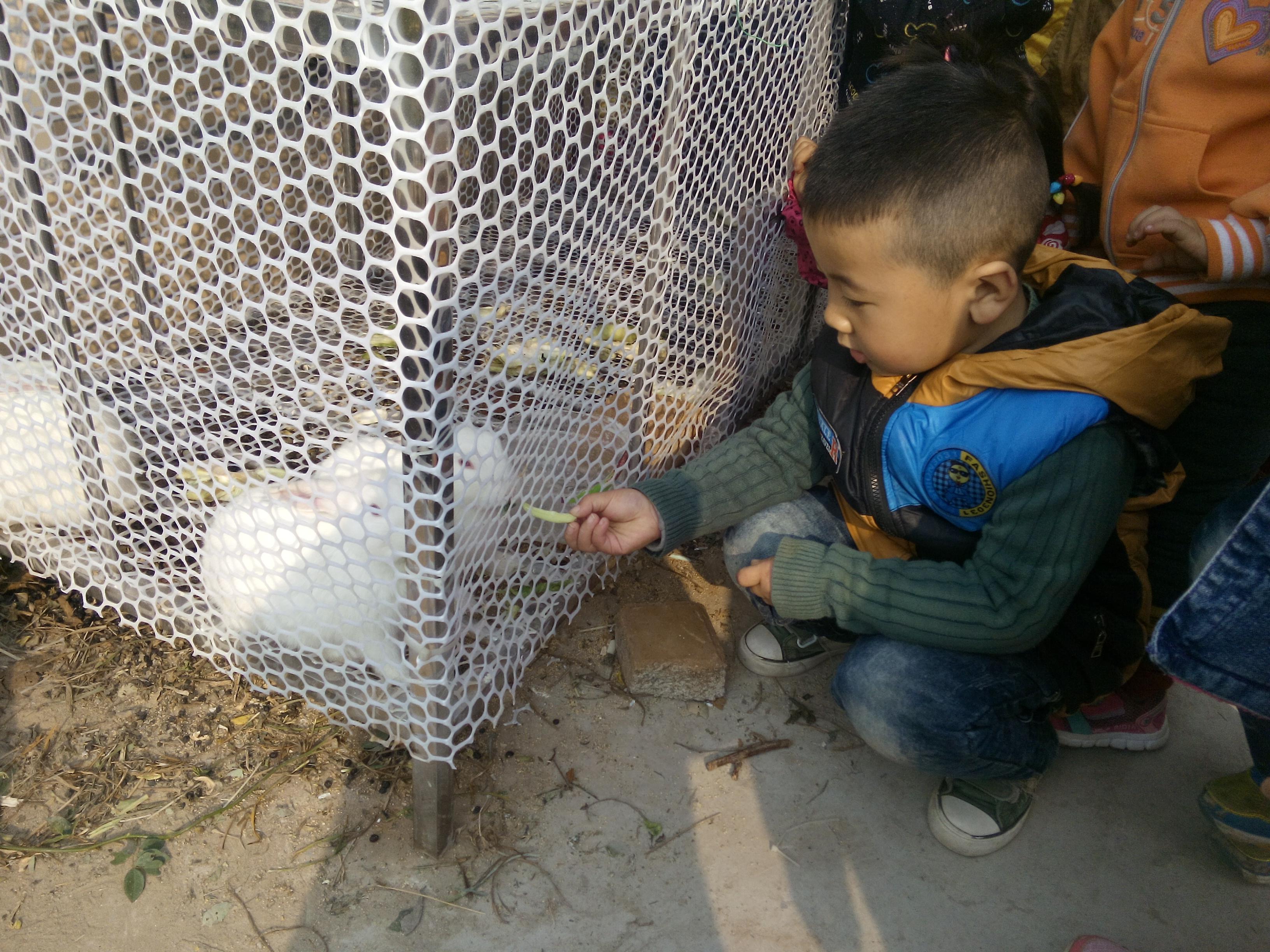 1,让幼儿了解 小动物喜欢吃的食物,并知道不能 随便喂小动物食物.