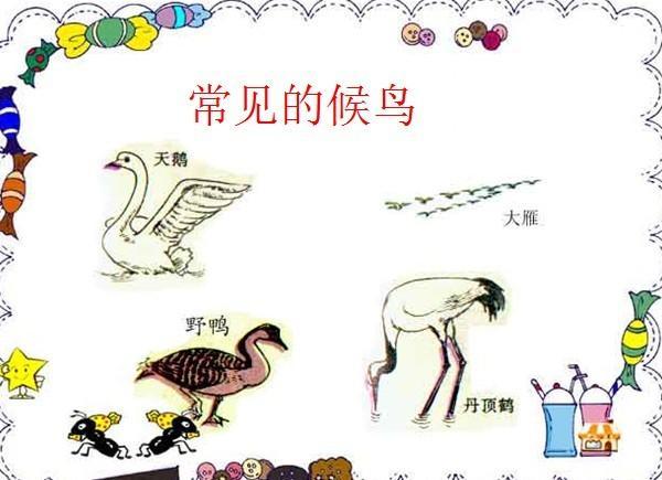 动物怎样过冬-定远县粮食局幼儿园