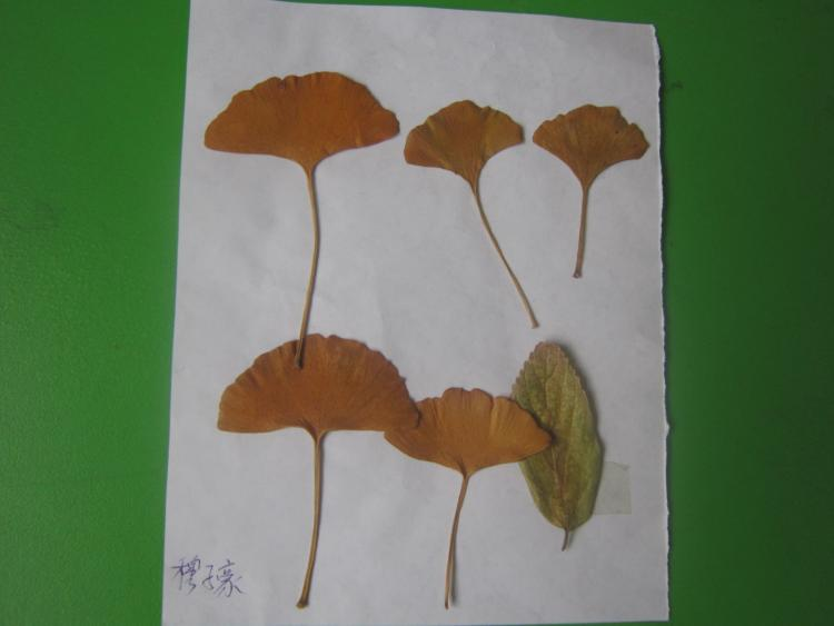 关于秋游的画图片内容|关于秋游的画图片版面设计