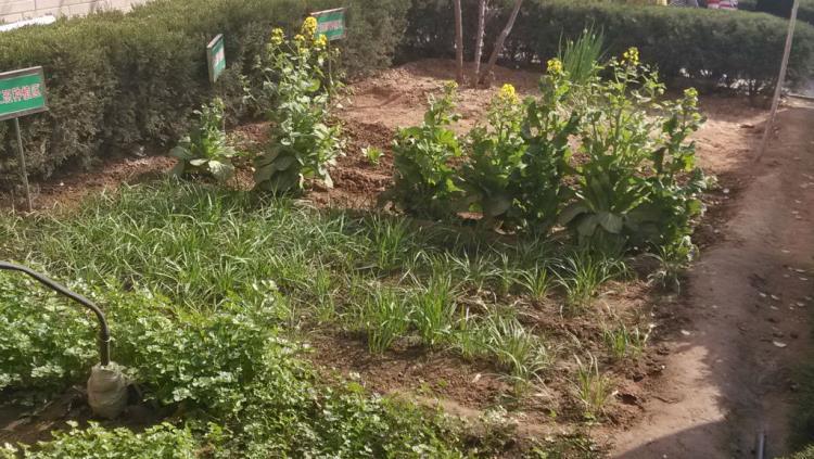 河西小学幼儿园——寻找春天的足迹